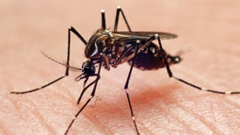 RN já tem confirmados 77 casos de dengue em 2021