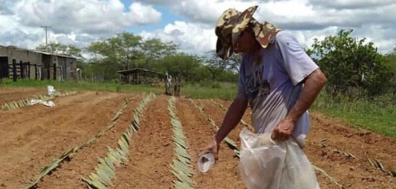 Governo do RN beneficia 300 famílias com a distribuição de palma forrageira