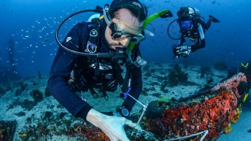 Expedição na APARC remove cerca de 1500 colônias de Coral-sol