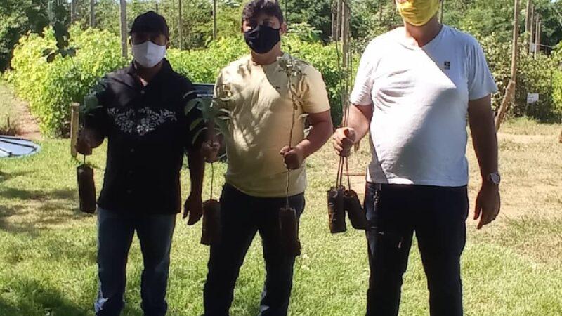 Prefeitura de Caraúbas recebe mudas nativas da empresa Vita Mais para plantio na semana do Meio Ambiente