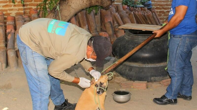 Prefeitura realiza Testes Rápidos em cães e borrifação para prevenir calazar