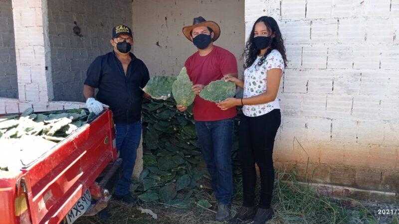 Prefeitura de Caraúbas dá continuidade a distribuição de mais 12 mil raquetes de palmas