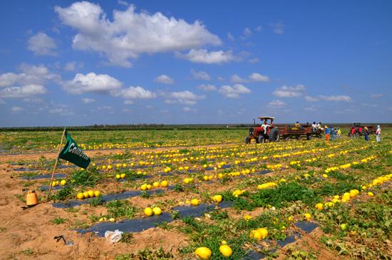 Parceria da Prefeitura de Caraúbas e VitaMais convoca 102 trabalhadores para atuar em fazenda de fruticultura