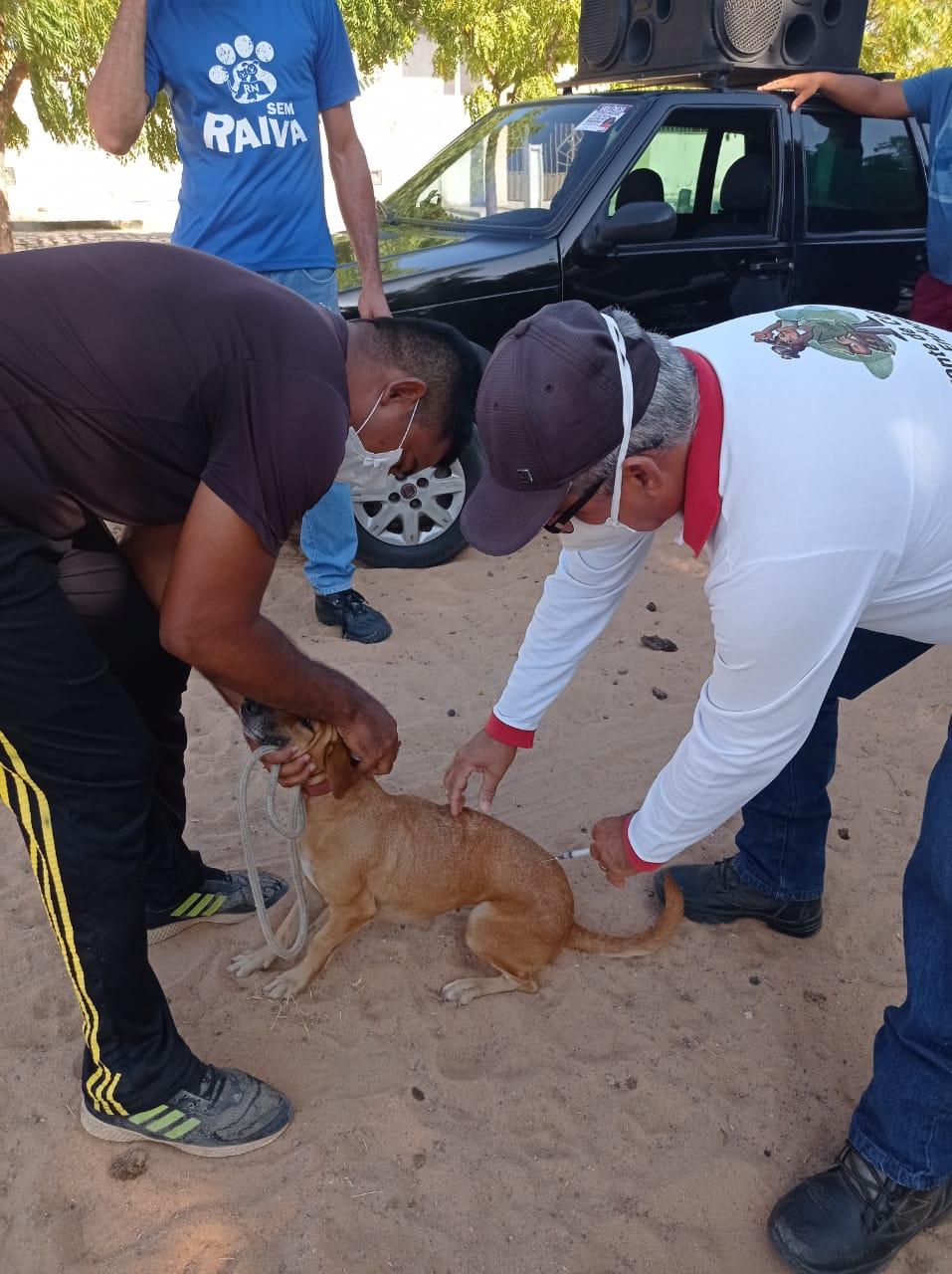 Prefeitura de Caraúbas inicia campanha de vacinação antirrábica para cães e gatos