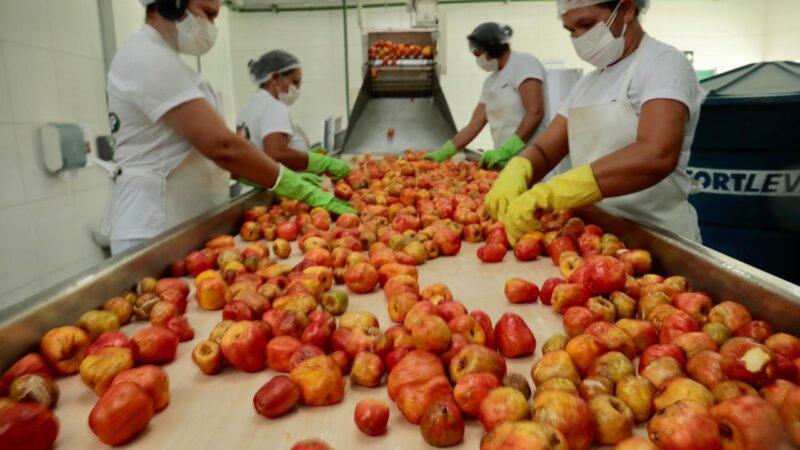 Governo investe e Frutcoop gera mais de 20 empregos em São Vicente
